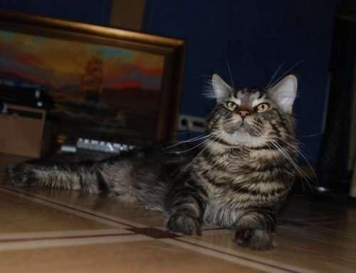 Главное правило совместного проживания с кошками