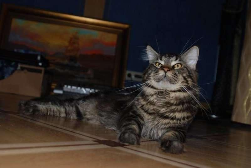 Котёнок ссыт в один угол